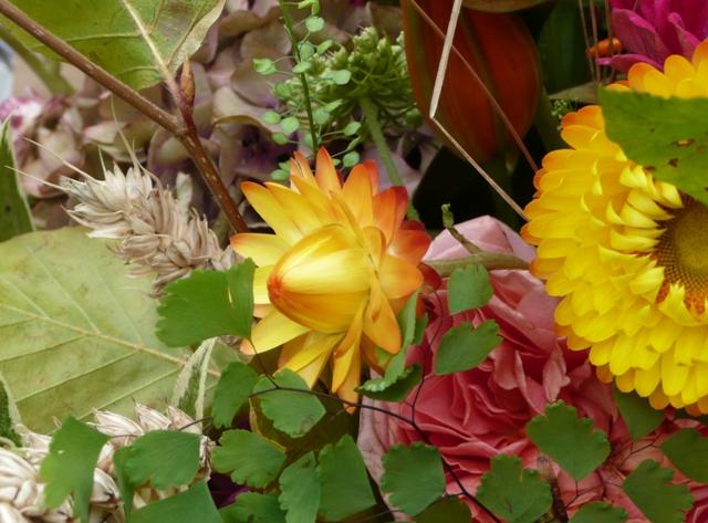 yellow flowers bud